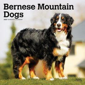 Browntrout Berner Sennenhunde Kalender 2020