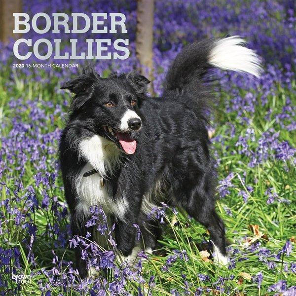 Browntrout Border Collie Kalender 2020