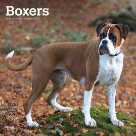Browntrout Boxer Kalender 2020