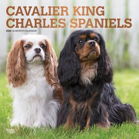Browntrout Cavalier King Charles Spaniel Kalender 2020