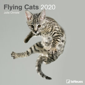 teNeues Flying Cats Kalender 2020