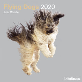 teNeues Flying Dogs Kalender 2020