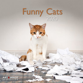 teNeues Funny Cats Kalender 2020