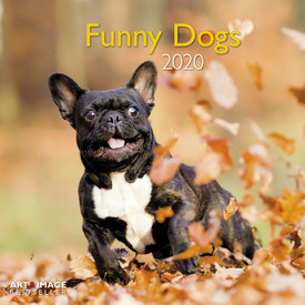 teNeues Funny Dogs Kalender 2020