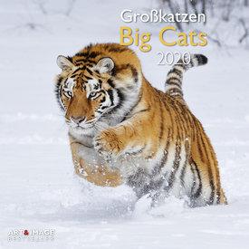 teNeues Großkatzen Kalender 2020