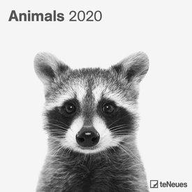 teNeues Dieren - Animals Kalender 2020