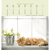 Katten Postcard Kalender 2020