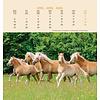Paarden - Horses Postcard Kalender 2020