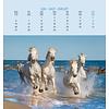 Pferde Postkartenkalender 2020