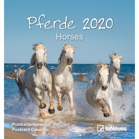 Paarden Postcard Kalender 2020