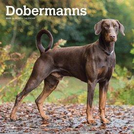 Browntrout Dobermann (Intl) Kalender 2020
