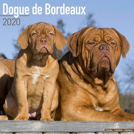 Avonside Bordeaux Dog Kalender 2020