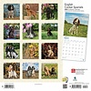English Cocker Spaniel - Englische Cockerspaniel Kalender 2020