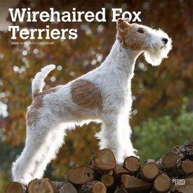 Browntrout Draadharige Fox Terrier Kalender 2020