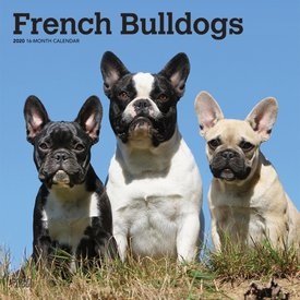 Browntrout Französische Bulldoggen Kalender 2020