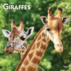 Browntrout Giraffen Kalender 2020
