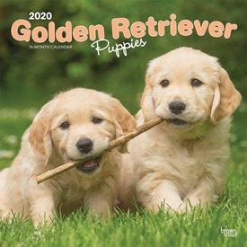 Browntrout Golden Retriever Welpen Kalender 2020