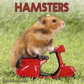 Avonside Hamster Kalender 2020