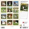 Jack Russell Terriers International Kalender 2020