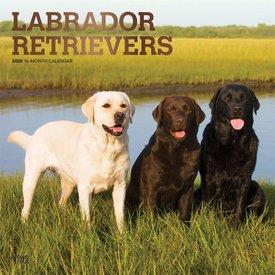 Browntrout Labrador Retriever Mixed Kalender 2020