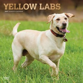 Browntrout Blonde Labrador Retriever Kalender 2020