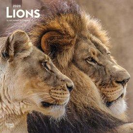 Browntrout Löwen Kalender 2020