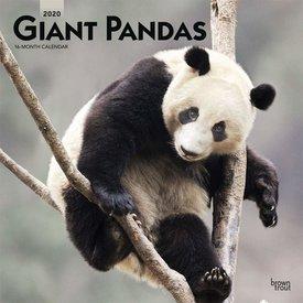 Browntrout Pandas - Pandabären Kalender 2020