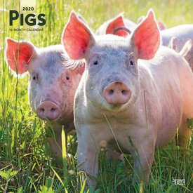 Browntrout Schweine Kalender 2020