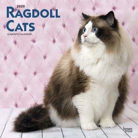 Browntrout Ragdoll Kalender 2020
