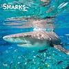 Haie - Sharks Kalender 2020