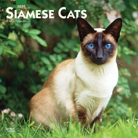 Browntrout Siam Katzen - Siamese Cats Kalender 2020