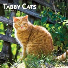 Browntrout Cyperse Kat - Tabby Katten Kalender 2020