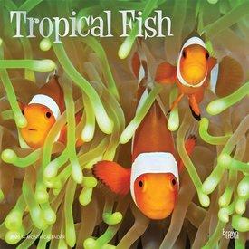Browntrout Tropische Fische Kalender 2020