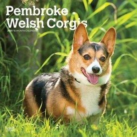 Browntrout Welsh Corgi Pembroke Kalender 2020
