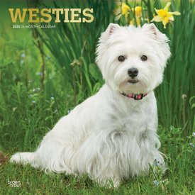 Browntrout West Highland White Terrier  Kalender 2020