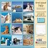 Griechische Inselkatzen Kalender 2020