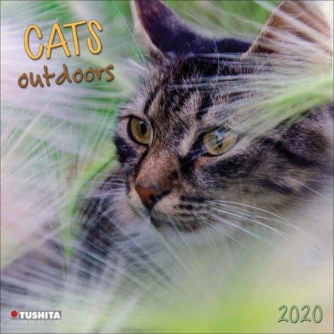 Katzen Outdoors Kalender 2020