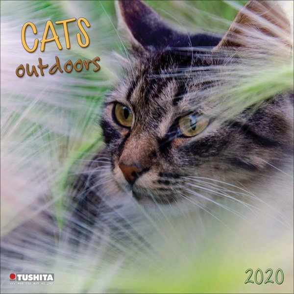 Tushita Katzen - Cats Outdoors Kalender 2020