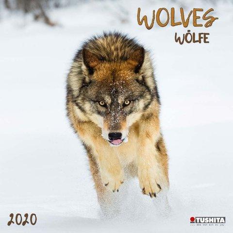Wölfe Kalender 2020