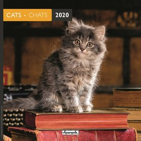 Aquarupella Katten - Cats 2 Kalender 2020