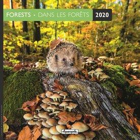 Aquarupella Im Wald - Forests Kalender 2020