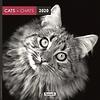 Katzen - Cats Schwarzweiss Kalender 2020