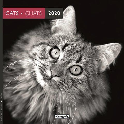 Katzen - Cats s/w Kalender 2020