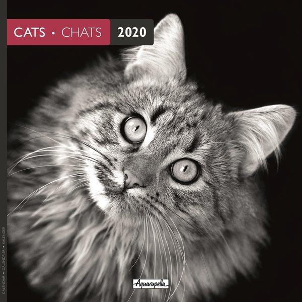 Aquarupella Katzen - Cats Schwarzweiss Kalender 2020