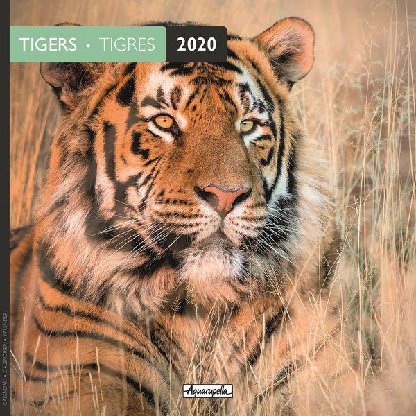 Aquarupella Tiger - Tigers Kalender 2020