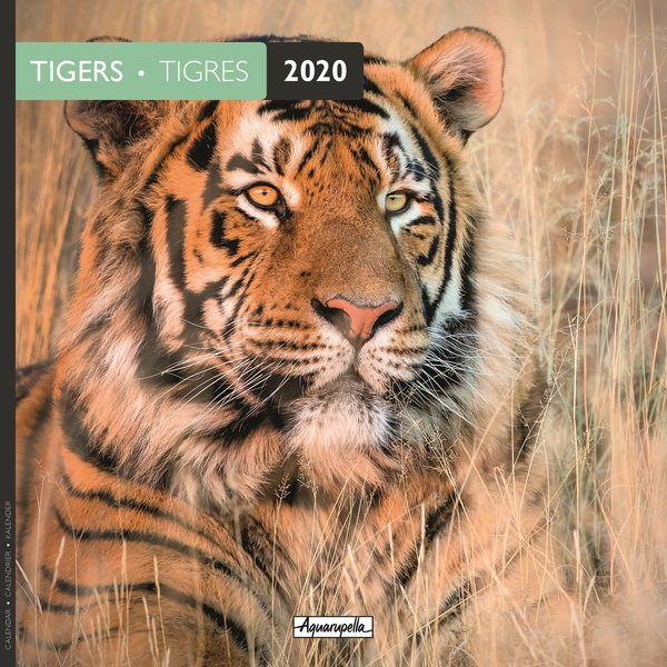 Aquarupella Tijger - Tigers Kalender 2020