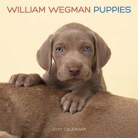 Abrams William Wegman Welpen Kalender 2020