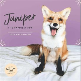 Chronicle Books Juniper The Happiest Fox Kalender 2020