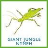 Insekten- Bug Bingo