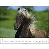 De Paarden van IJsland Kalender 2020